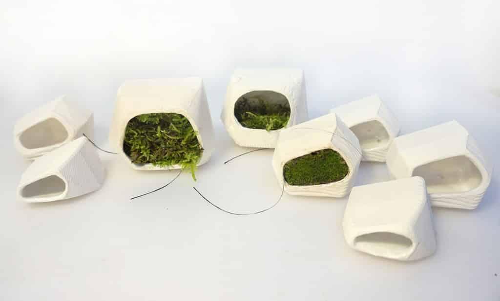 Moss Voltaics